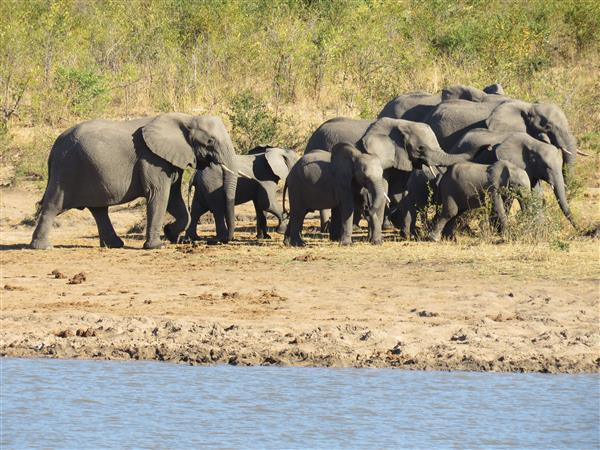 herd of elephants South Africa copyright Tampone 2016